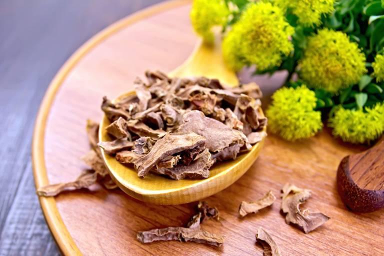 Золотой корень: уникальные целебные свойства, народные рецепты, противопоказанияозовой