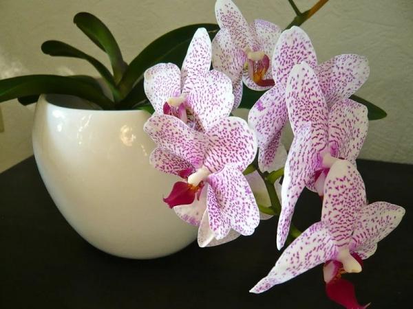 орхидеи в спальне